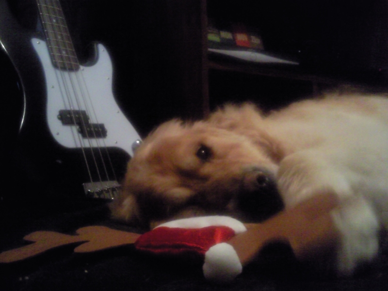 Pup at Christmas